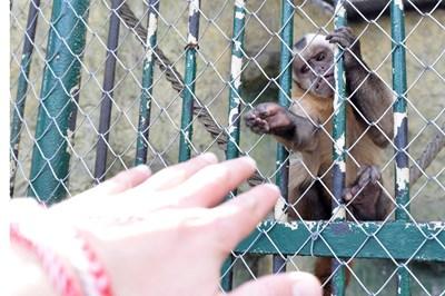Маймуните в Софийския зоопарк ще останат затворени още 3 месеца и посетителите няма да имат достъп до тях.