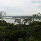 Из дебрите на Амазонската джунгла (Видео, снимки)