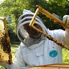 За 8 месеца през 2019 г. обемът на износа на мед е нараснал почти един и половина пъти в сравнение със същия период на 2018 г. и възлиза на 31,8 хиляди тона в размер на 58,5 милиона долара.