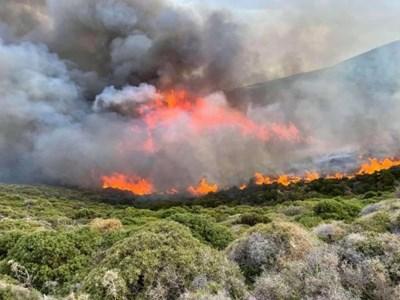 Над 40 пожара в Гърция