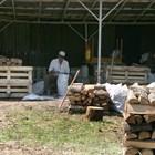 Над 1 млн. куб. м дърва за огрев се осигуряват за зимата