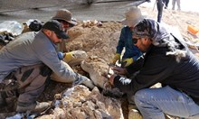 В най-сухата пустиня на света откриха морски хищник на 160 млн. години