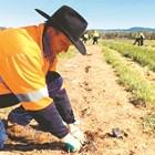 Проектът ще бъде разположен във фермата на AgriPark с площ от 1900 хектара