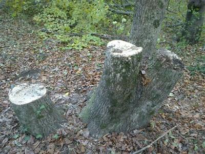 12 кубика нелегални дърва са спрени в Държавното ловно стопанство - Тервел