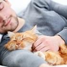 Котката е перфектният домашен любимец