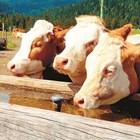 Проверки в животновъдните обекти за кампания 2021 - само в сутрешните часове