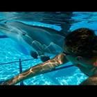 Робот-делфин може да замести живите животни в увеселителниге паркове (Видео)