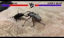 Двубой между бръмбари