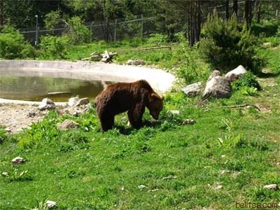 Снимка: Парк за танцуващи мечки