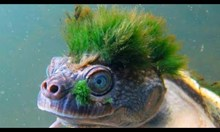 14 от най-странните същества на планетата