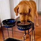 До купичката с храна трябва да стои купичката с вода на кучето