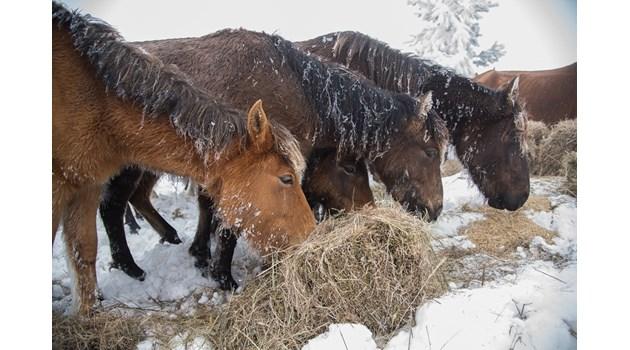 Прокурори се захващат със собственика на изоставените животни