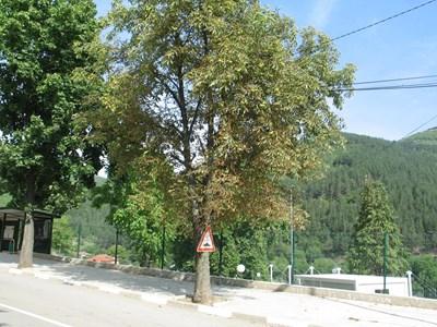 Насажденията от орехи край пътищата в България са значителни на брой и влизат в статистиката, но често продукцията от тях е в сивия сектор.