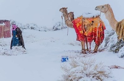 Сняг в Сахара Снимка: Magnus