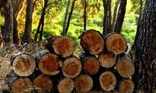 Спипаха четирима от село Медовница, секли дърва незаконно