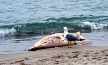 Какво убива делфините в Черно море