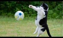Котки вратари