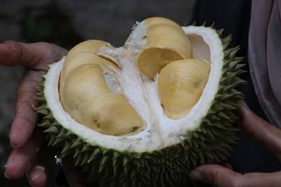 Изобретиха как най-миризливият плод да се превърне в зарядно