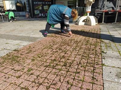 Чистачка с ножче чегърта тревата между фугите на плочките по Главната улица. Снимки: Авторът