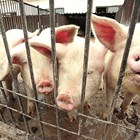 Делегация от ЕП идва у нас, за да провери хуманното отношение към животните при транспорт