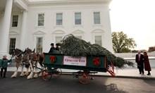 Доналд и Мелания Тръмп приеха елхата за Белия дом (Снимки)