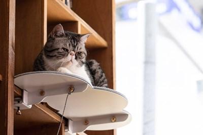 Снимки dezeen.com