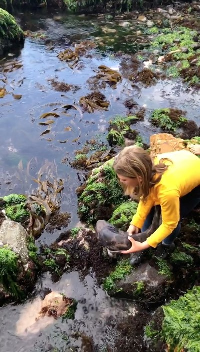 11-годишно момиче спаси акула  СНИМКА: Ройтерс/ABBY GILBERT