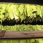 Платиха над 71 млн. лв. на 39 748 тютюнопроизводители