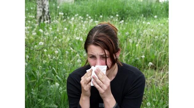 Пробиотици помагат при сенна хрема
