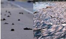 2 хипотези за мъртвите птици и риби