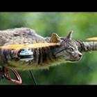Дронове от препарирани животни