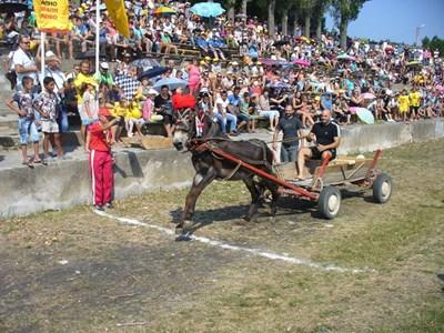 Тази година в биоралито в Гурково се пуснаха 13 магарешки екипажа.  Снимки: Ваньо Стоилов