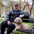 С куче никога няма да си сам