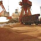 320-330 лв. предлагат за тон пшеница от новата реколта