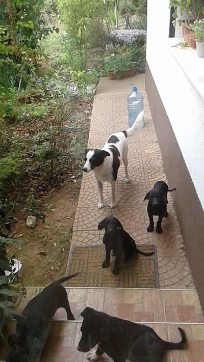 Кученцата на Нешка Робева порастнаха Снимки: Фейсбук