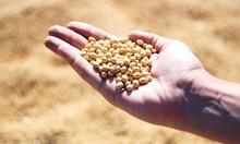 Израелски учени използваха соя за производство на евтино изкуствено месо