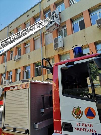 Пожарникари и еколози спасяват лястовички от последния етаж на болницата в Монтана.  СНИМКА: АВТОРЪТ