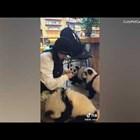 Кафене в Китай боядисва пухкави кучета като панди (Видео)