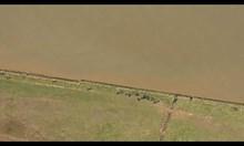 Белуга бе забелязана в река Темза, близо до Лондон