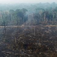 Амазонската джунгла е обхваната от опустошителни горски пожари
