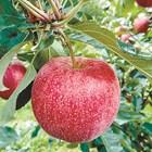 Помогнете на плодовете да нарастват