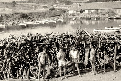 Тези стари морски снимки са от архива на Илия Кръстев от Варна. Първата е от 1963 г. Това е първата леководолазна комерсиална изява на български водолази - почистване на пристанището на гр. Мичурин (днес Царево) от нападали дървета - с Любо Клисуров, Траян Траянов и Наско от Абърдийн, разказва Кръстев.  СНИМКИ: ИЛИЯ КРЪСТЕВ