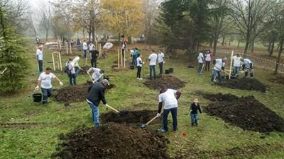 """Служители от """"Джи Пи Груп"""" засадиха над 1600 дървета в София и Бургас."""
