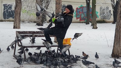 Русенец храни гълъбите в парка от устата си СНИМКА И ВИДЕО: Росен Моллов