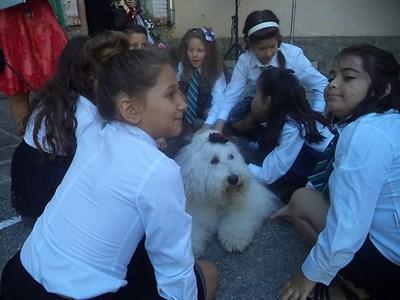 """Учениците от """"Патриарх Евтимий"""" се надпреварваха да галят Мон СНИМКА: Анелия Перчева"""
