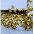 Много от стресовете при пчелите могат да бъдат смекчени с помощта на подходящи практики и техники, напомнят специалистите.