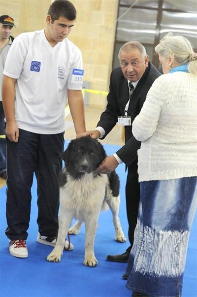 Кучето на Бойко Борисов- Лазар на международната киноложка изложба в Пловдив през 2011 година. СНИМКА: 24 часа онлайн