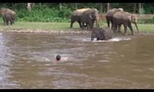 Слон спасява човек от удавяне