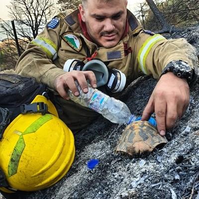 Акис Бардакис е заснет да дава вода на малка костенурка след пожар в Птери. Снимки: Туитър