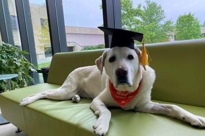 Муус - кучето терапевт с докторска степен по ветеринарна медицина. Снимка: Туитър